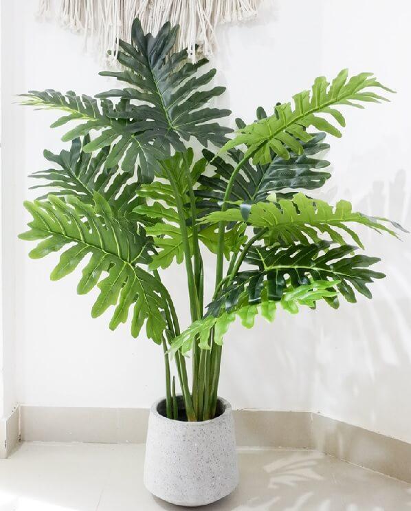 Philodendron filodendro coltivazione e cura in vaso consigli