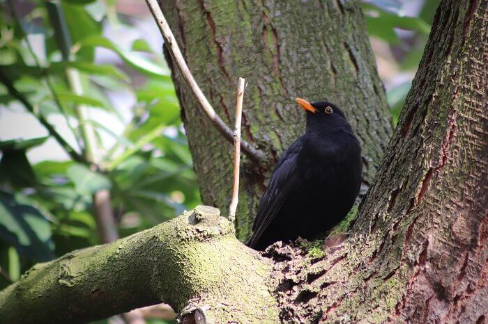 birdgardening guida pratica per gli uccelli nel tuo giardino