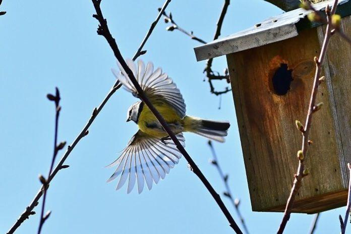 birdgardening guida pratica per il tuo giardino