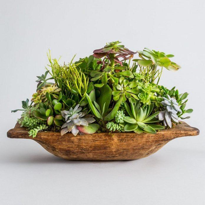 come fertilizzare concimare le piante grasse