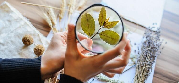 glossario botanico di piante alberi e fiori, termini tecnici e scientifici