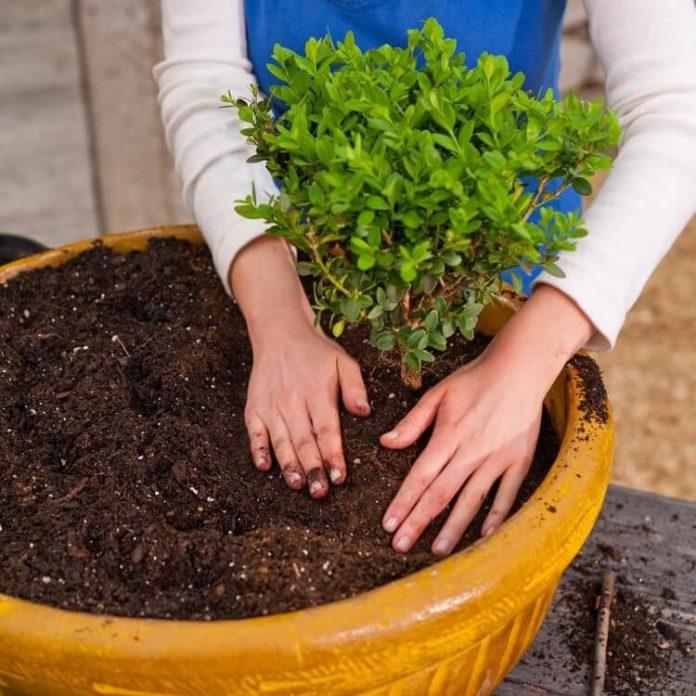 il terriccio substrato per piante coltivate in vaso