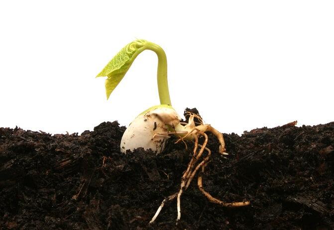 la germinazione di un seme
