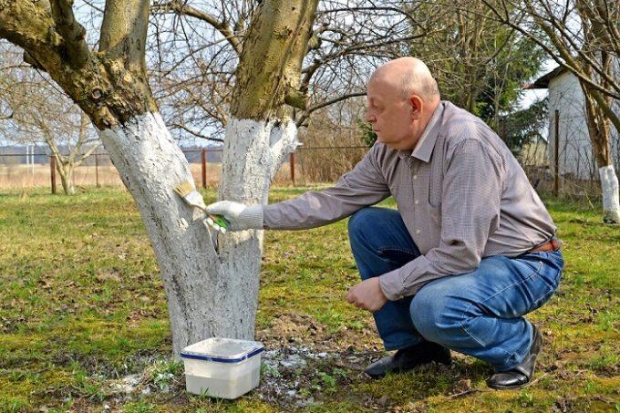 latte di calce su tronco pianta fitosanitari naturali orto biologico