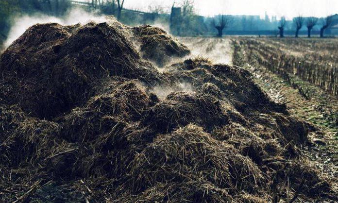 letame compost compostaggio orto giardino concime