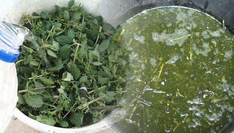macerato di ortice concime organico ortaggi orto