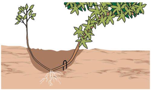 moltiplicazione piante per propagine