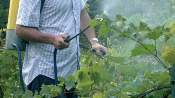 prodotti fitosanitari naturali orto biologico