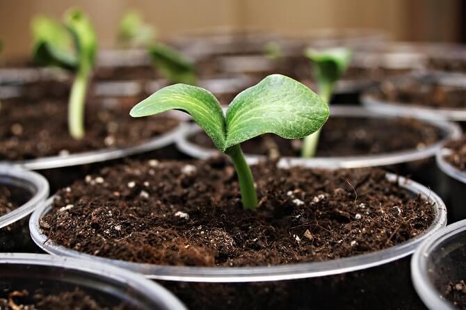 terriccio specifico per semina